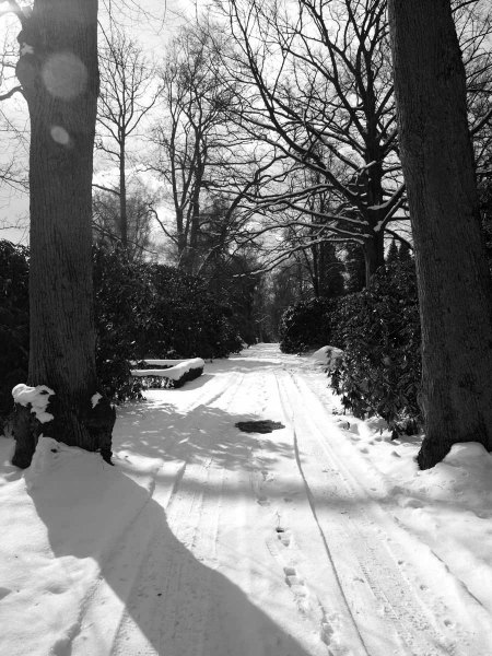 Friedhof Ohlsdorf im Winter