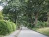 wellingsbüttel-bäume